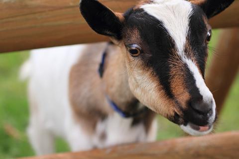 納税通知なんてヤギにでも食べてもらってなかったことにしたい。