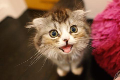 きりのきは猫大好きです。飼ったことありませんが。