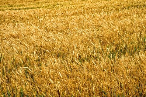 農家だってこれでいくらになるのか考えながら作業しています。