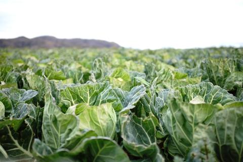 野菜を作るのも効率を取るかリスクを減らすか、難しい悩みがあるのでしょう。