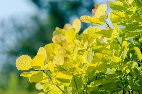 植物が何度でも新芽を出すように、人間も何度でも新たなチャレンジができるはず。