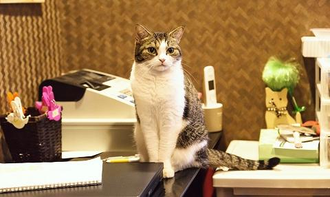 店番をする猫にかかるお金は経費でしょうか。