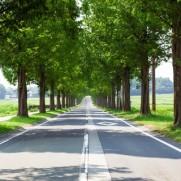大きな一本の木よりも小さな木がたくさんあるほうが緑化に効果がありますよね。