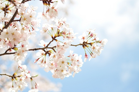 桃の節句は祝日ではないけれども、は女性にとって大切な日ですね。