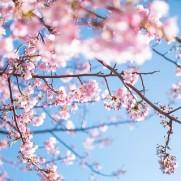 桜が散ったら次はゴールデンウィーク? いえいえ、休んでいる暇はありません。