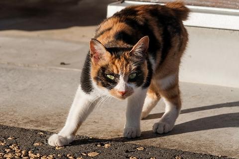猫のような警戒感が欲しいところです。