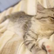 一日眠っていたいですが、そうもいっていられないのが辛いところ。