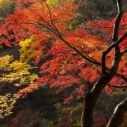 自然に恵まれた日本ですが、その価値は保たれるのでしょうか?