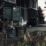 日本中に空き家……いえ、廃墟が存在しています。