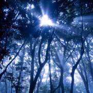 長かった迷いの森も、ついに出口を見つけたかもしれません。