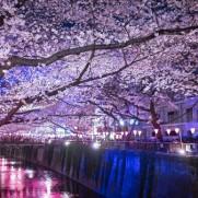 今年の桜もとても素敵ですね。