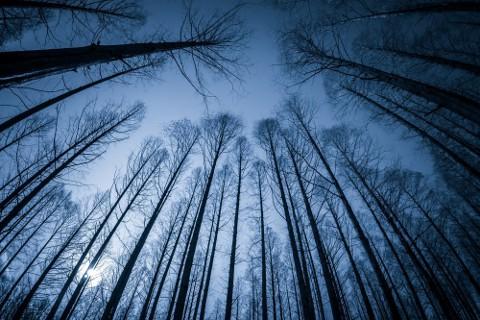 深い森に入り込んでしまった中国経済。果たして無事に出られるのか。