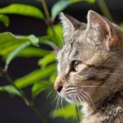 猫が飼えるようになるのが最終目標です。