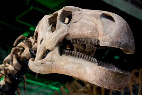 恐竜にとっては骨折は死と同義だったのではないでしょうか。