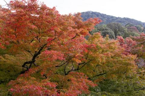 紅葉でもゆっくり見てこようと思います。