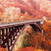 紅葉の秋は分析日和です。