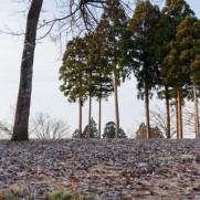 植えた木が育つには時間が掛かって当たり前。