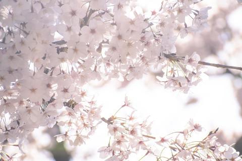 桜も咲く季節ですし、一つ頑張ってみてはいかがでしょう?