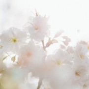 予算も成立し、今年こそ日本の景気に春は訪れるのでしょうか。