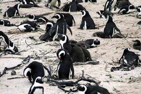 動物は本能が強く生存競争が激しいので、平凡が一番幸せであると思いますが。