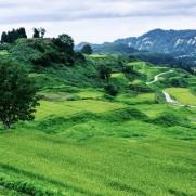 美しい水田の連なりは日本の古き良き風景ですが、それを守るにはコメ農家の努力が欠かせません。
