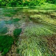 綺麗な水を維持する為に犠牲になる存在もあるのが世の常。