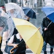 ここのところ台風で甚大な被害が日本列島各地で発生しています。