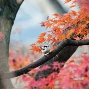 そろそろ紅葉の季節が近いですね。