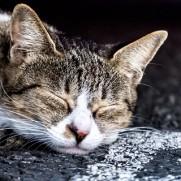現実に生きる動物も、夢の中では幸せなのでしょうか。