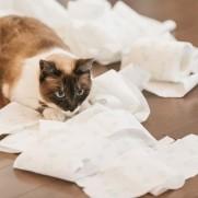猫が散らかした分は飼い主がきれいにしなければ。
