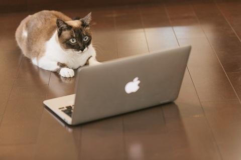 いくら頑張っても猫はそう簡単にパソコンを使えません。