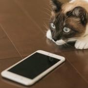 電話番をしてくれる人がいいると安心なのですが。
