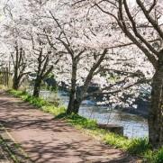 桜の季節は変化が多いですね。