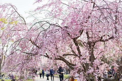 不動産投資のスタートは桜の咲く季節でした。