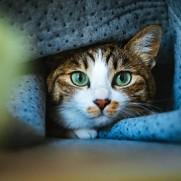 暖冬でも僕は布団にくるまっています。